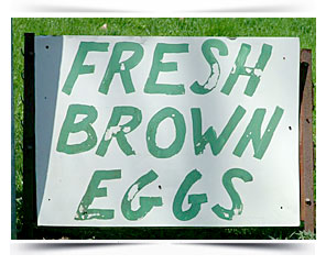 farm fresh eggs glastonbury ct